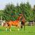 fighting horses stock photo © kirschner