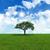 dąb · dziedzinie · niebieski · mętny · niebo · chmury - zdjęcia stock © kjpargeter