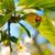 てんとう虫 · 座って · 花 · 蝶 · 春 · 夏 - ストックフォト © klagyivik