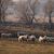 子羊 · 風景 · 小さな · 立って · 丘 · 見える - ストックフォト © klagyivik