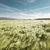 麦畑 · クローズアップ · ショット · 小麦 · 耳 · 夏 - ストックフォト © klikk