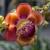 fiore · albero · pagoda - foto d'archivio © Klodien