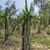campo · jóvenes · dragón · frutas · plantas · concretas - foto stock © Klodien
