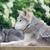 farkasok · kettő · egy · profil · mosolyog · farkas - stock fotó © KMWPhotography