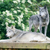 kettő · farkasok · pár · néz · éber · veszélyes - stock fotó © KMWPhotography