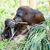 orangutan · anne · bebek · oturma · uzun · çim - stok fotoğraf © kmwphotography