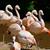 pembe · örnek · kuş · gündoğumu · göl · siluet - stok fotoğraf © kmwphotography
