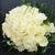 mariées · bouquet · thé · roses · macro · coup - photo stock © kmwphotography