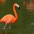 фламинго · птица · ходьбе · белый · животного · розовый - Сток-фото © kmwphotography