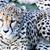 çita · çim · hayvan · Afrika - stok fotoğraf © KMWPhotography