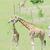 jonge · giraffe · moeder · baby · naar · twee - stockfoto © kmwphotography