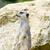 bakıyor · sevimli · oturma · kaya - stok fotoğraf © kmwphotography