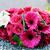 невеста · свадьба · Purple · женщину · рук · весны - Сток-фото © kmwphotography