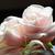 gelinler · pembe · çiçekler · buket · çiçek · düğün - stok fotoğraf © kmwphotography
