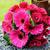 gelinler · buket · pembe · güller · çiçekler - stok fotoğraf © kmwphotography