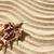 kum · kabukları · plaj · kumu · plaj · doğa · deniz - stok fotoğraf © koca777