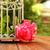 belo · gaiola · flores · brilhante · ilustração · flor - foto stock © koca777