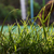 gazon · herbe · terre · main · texture - photo stock © koca777