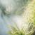 felce · foresta · bella · verde · pomeriggio · sole - foto d'archivio © konradbak