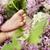 aile · renkli · çiçekler · bahçe · çiçek · bahar - stok fotoğraf © konradbak