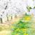 voorjaar · appelboomgaard · rij · appel · bomen - stockfoto © konradbak