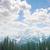 fenyőfa · erdő · köd · mély · természetes · fa - stock fotó © konradbak