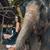 brunette elephant trainer feeding her pet stock photo © konradbak