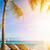 tropikal · deniz · gün · batımı · avuç · içi · güzel · manzara - stok fotoğraf © konstanttin