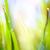芸術 · 緑 · 春 · 抽象的な · 光 · 夏 - ストックフォト © Konstanttin