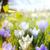 krokus · bloemen · voorjaar · tijd · druppels · bloem - stockfoto © konstanttin