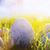 művészet · húsvét · fű · húsvéti · tojások · fa · boldog - stock fotó © konstanttin