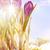 művészet · kikerics · virágok · hó · levél · jég - stock fotó © konstanttin