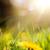 gyönyörű · citromsárga · pillangó · extrém · közelkép · makró - stock fotó © konstanttin