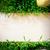 páscoa · fundo · grama · ovos · flor · madeira - foto stock © Konstanttin
