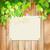 verde · frescos · colorido · árbol · hojas - foto stock © kostins