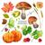 ősz · vízfesték · természetes · gyűjtemény · ősz · levelek - stock fotó © kostins