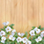 background with white flowers stock photo © kostins