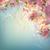 voorjaar · kersenbloesem · bruiloft · boom - stockfoto © kostins