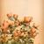 klasszikus · gramofon · rózsák · grunge · zene - stock fotó © kostins