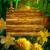 iris · bloemen · aquarel · digitale · schilderij · bloem - stockfoto © kostins