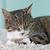 猫 · 寝 · 白 · カーペット · 犬 · 自然 - ストックフォト © Koufax73