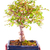 bonsai stock photo © koufax73