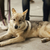 wolf stock photo © koufax73