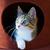 猫 · 外に · 穴 · ボックス · 頭 · 足 - ストックフォト © koufax73