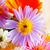 dahlia · bloem · natuur · blad · groene · Geel - stockfoto © koufax73