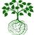 groene · hersenen · boom · vector · denk · ecologisch - stockfoto © krisdog