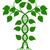 ADN · génétique · icône · arbre · feuilles · vertes · usine - photo stock © krisdog