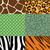 zebra · hayvan · baskı · model - stok fotoğraf © krisdog