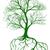 wortel · hersenen · boom · groeiend · zoals - stockfoto © krisdog