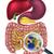 vergrootglas · flora · gericht · menselijke · spijsverteringsorganen · kanaal - stockfoto © krisdog